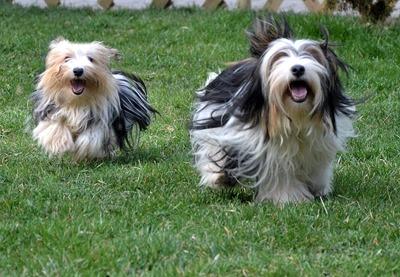Lolitta és Leila